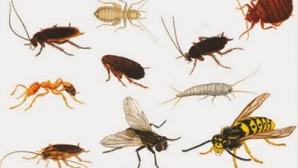 Sinekler Ve Böcekler
