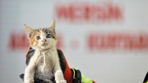 Hava Soğudu Kaputa Giren Kedi Sayısı Arttı