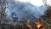Doğu Karadeniz'de 4 ilde 23 farklı noktada yangın çıktı! Ekiplerin müdahalesi aralıksız sürüyor