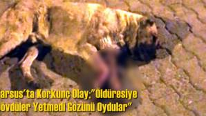 Tarsus'ta Korkunç Olay, Öldüresiye Dövdüler Yetmedi Gözünü Oydular