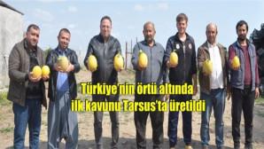 Türkiye'nin örtü altında ilk kavunu Tarsus'ta üretildi