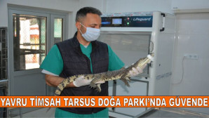 YAVRU TİMSAH TARSUS DOĞA PARKI'NDA GÜVENDE