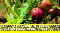 Tarsus'ta Etkili Olan Dolu Sebze Ve Meyve Bahçelerine Zarar Verdi