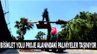 BİSİKLET YOLU PROJE ALANINDAKİ PALMİYELER TAŞINIYOR