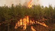 141 yangın kontrol altına alındı, 9 noktada alevlere müdahale ediliyor! İşte il il son durum