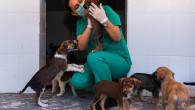 Kaşlı Geçici Hayvan Bakımevi, 1 Eylül'e Kadar Ziyarete Kapalı Olacak