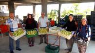 Silifke'de üretimi yapılan yaş incir 10 lira, kuru incir ise 50 liradan satılıyor